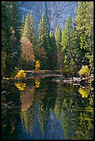 Merced River, trees and reflections at the base of Cathedral Rocks. Yosemite National Park, California, USA.