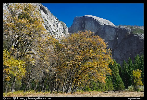 Trees in autumn foliage and Half Dome, Ahwahnee Meadow. Yosemite National Park (color)