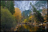 Trees in fall foliage bordering Merced River. Yosemite National Park ( color)