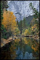 Trees in autumn foliage reflected in Merced River. Yosemite National Park, California, USA.