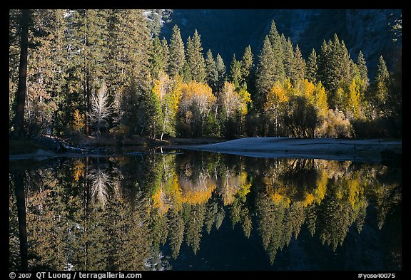 Sunlit trees and reflections, Merced River. Yosemite National Park (color)