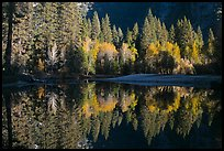 Sunlit trees and reflections, Merced River. Yosemite National Park ( color)