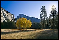 Ahwahnee Meadow with sun shinnig through tree, early morning. Yosemite National Park, California, USA. (color)