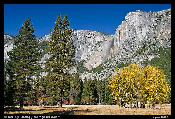 Aspens, pine trees, and Yosemite Falls wall in autum. Yosemite National Park (color)