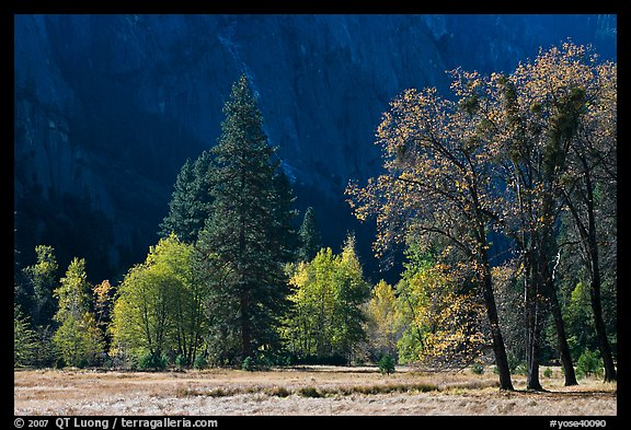 Trees in various foliage stages in Cook Meadow. Yosemite National Park (color)