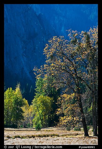Autumn trees in Cook Meadow. Yosemite National Park (color)