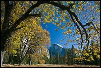 Arched branch with autumn leaves and Half-Dome. Yosemite National Park, California, USA. (color)