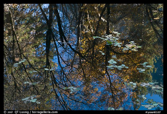 Reflections of cliffs and trees in creek. Yosemite National Park (color)