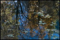 Reflections of cliffs and trees in creek. Yosemite National Park, California, USA.