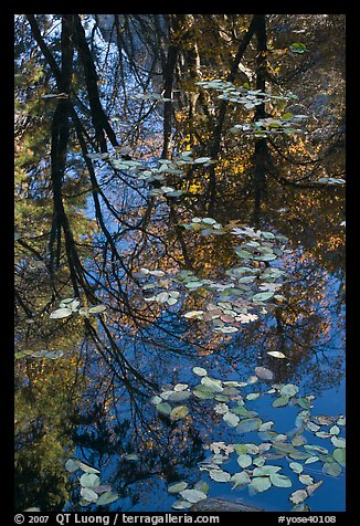 Fallen leaves and reflections. Yosemite National Park (color)