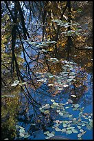 Fallen leaves and reflections. Yosemite National Park ( color)