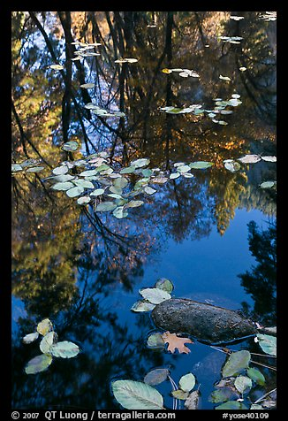 Creek with trees in autumn color reflected. Yosemite National Park (color)