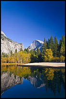 Trees in fall foliage and Half-Dome reflected in Merced River. Yosemite National Park, California, USA.