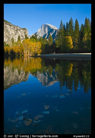 Fallen leaves, Merced River, and Half-Dome reflections. Yosemite National Park (color)