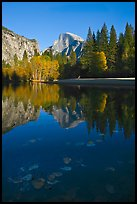 Fallen leaves, Merced River, and Half-Dome reflections. Yosemite National Park, California, USA.