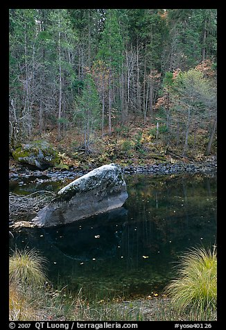 Boulder and reflections in  Merced River in autumn. Yosemite National Park, California, USA.