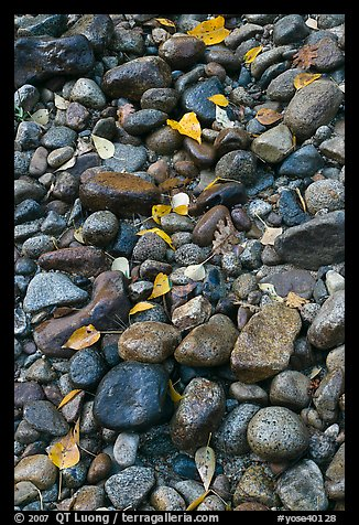 Pebbles and fallen leaves. Yosemite National Park (color)