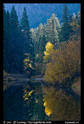 Sunlit autumn tree, Merced River. Yosemite National Park (color)