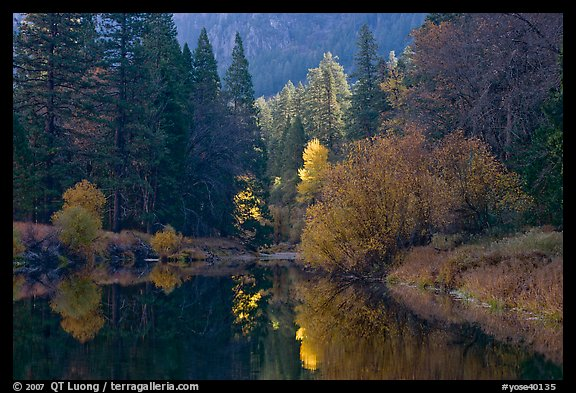 Bright autumn tree, Merced River. Yosemite National Park (color)