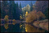 Bright autumn tree, Merced River. Yosemite National Park, California, USA. (color)