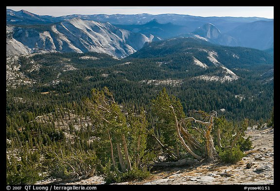 Wind-curved trees, Clouds Rest and Half-Dome from Mount Hoffman. Yosemite National Park (color)