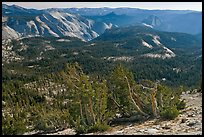 Wind-curved trees, Clouds Rest and Half-Dome from Mount Hoffman. Yosemite National Park ( color)