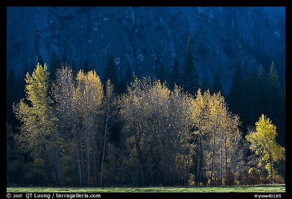 Trees with sparse autumn leaves, Sentinel Meadow. Yosemite National Park (color)