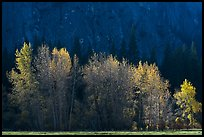 Trees with sparse autumn leaves, Sentinel Meadow. Yosemite National Park, California, USA.