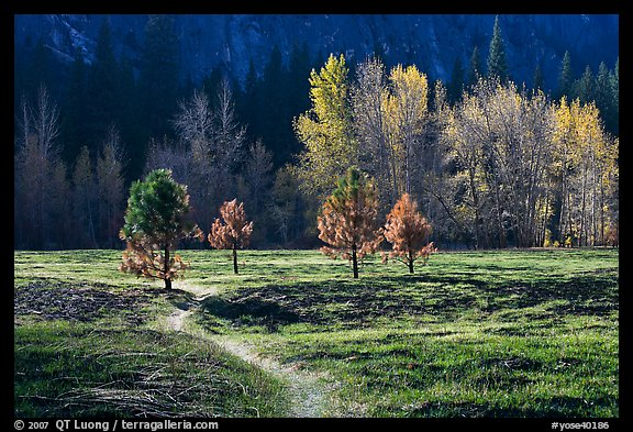 Trail in Sentinel Meadow in autumn. Yosemite National Park (color)
