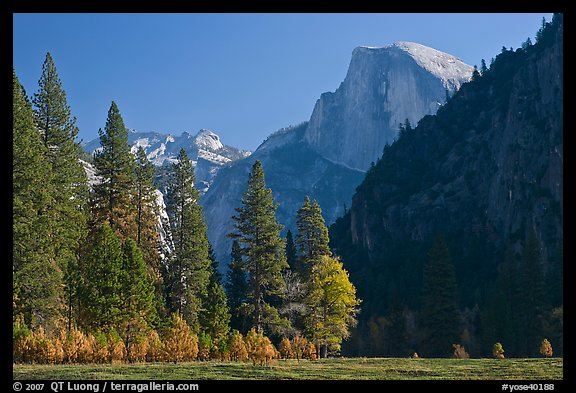 Half-Dome seen from Sentinel Meadow. Yosemite National Park (color)