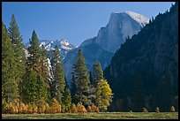 Half-Dome seen from Sentinel Meadow. Yosemite National Park, California, USA. (color)