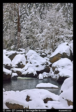 Snow-covered boulders in Merced River and trees. Yosemite National Park (color)