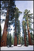 Upper Mariposa Grove and Mariposa Grove Museum in winter. Yosemite National Park, California, USA.