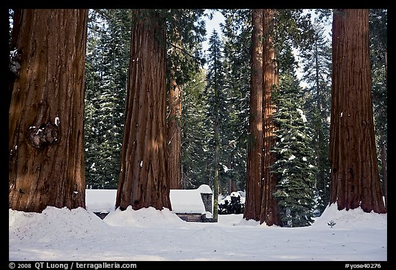 Mariposa Grove Museum at the base of giant trees in winter. Yosemite National Park, California, USA.