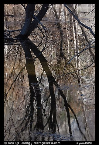 Willows reflected in Merced River. Yosemite National Park (color)