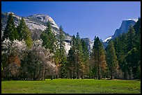 Meadow, North Dome, and Half Dome in spring. Yosemite National Park ( color)