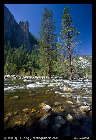 Rostrum, tall trees, and Merced River. Yosemite National Park (color)