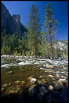 Rostrum, tall trees, and Merced River. Yosemite National Park, California, USA. (color)