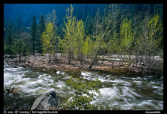 Newly leafed trees on island and Merced River, Lower Merced Canyon. Yosemite National Park (color)