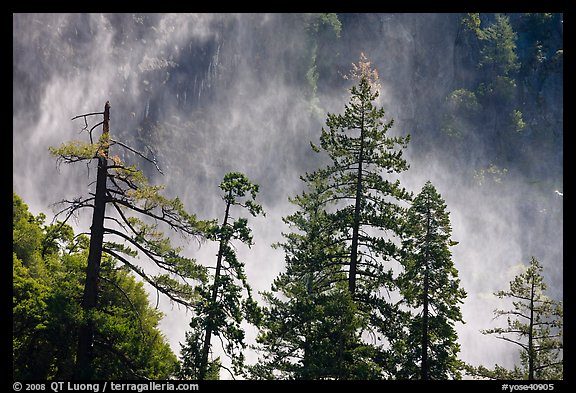 Trees and mist from Bridalveil falls. Yosemite National Park (color)