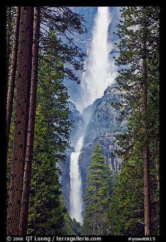 Upper and Lower Yosemite Falls framed by pine trees. Yosemite National Park (color)