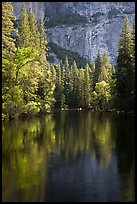 Trees reflected in river at the base of El Capitan in spring. Yosemite National Park ( color)