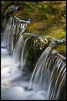 Fern Spring in the Spring. Yosemite National Park ( color)