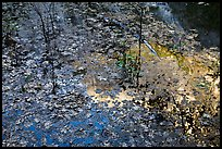 Leaves and Half-Dome reflected in Mirror Lake. Yosemite National Park ( color)