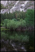 Refections and green trees, Mirror Lake. Yosemite National Park, California, USA. (color)