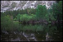 Willows, cliffs, and reflections, Mirror Lake. Yosemite National Park, California, USA.