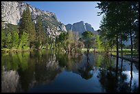 Swollen Merced River reflecting trees and cliffs. Yosemite National Park, California, USA. (color)