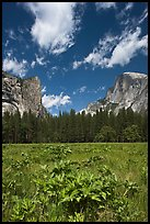 Meadow, Washington Column, and Half-Dome. Yosemite National Park ( color)