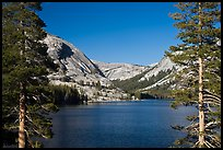 Tenaya Lake and Medlicott Dome framed by trees. Yosemite National Park, California, USA.