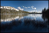 Willows and snowy peaks reflected in Tenaya Lake. Yosemite National Park ( color)